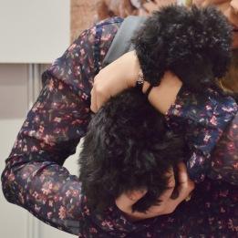 14 week old Toy Poodle